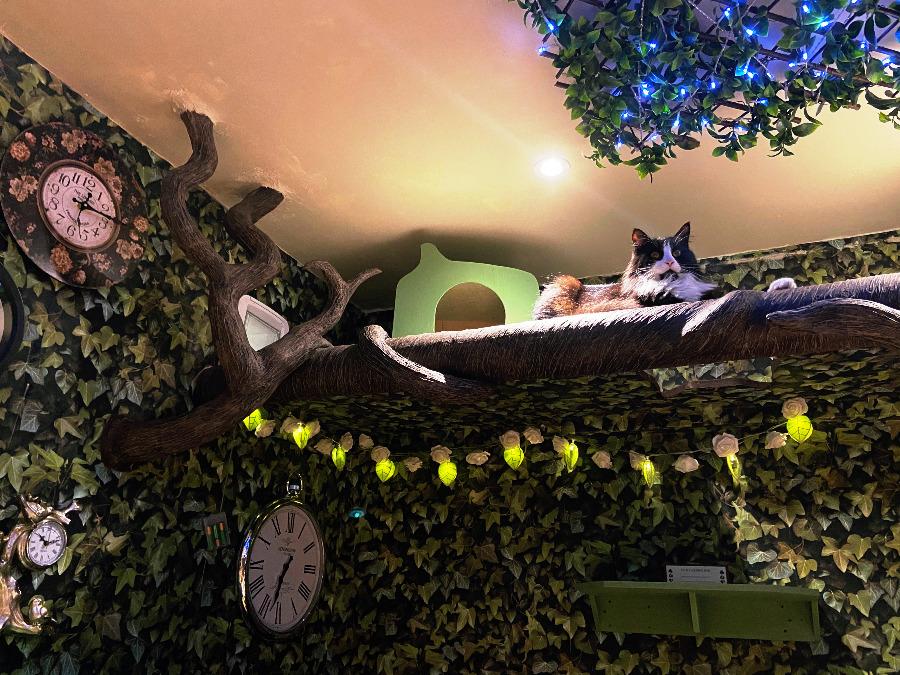 Lady Dinah's Cat Emporium London