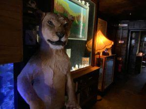 Museum of Curiosity Absinthe Bar