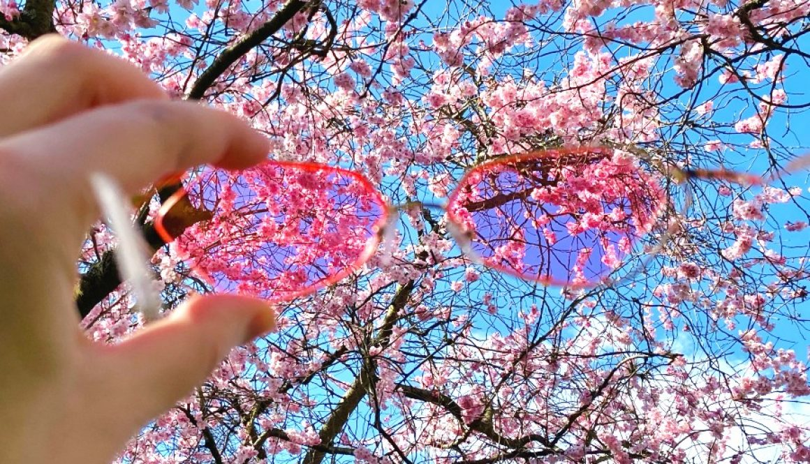 5 Beautiful Places to See Cherry Blossom in London