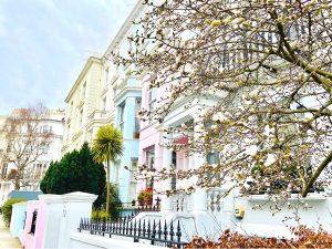 Cherry Blossom Notting Hill - Chepstow Villas