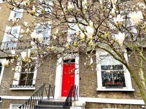 Cherry Blossom Notting Hill - Kensington Park Road