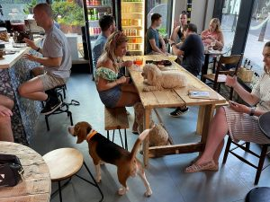 Dogs at After Bark Bar